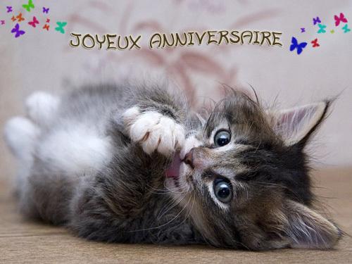 chat-anniversaire--1c01e0b